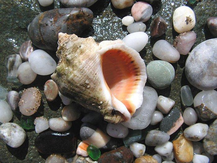 shells_38 (700x524, 95Kb)