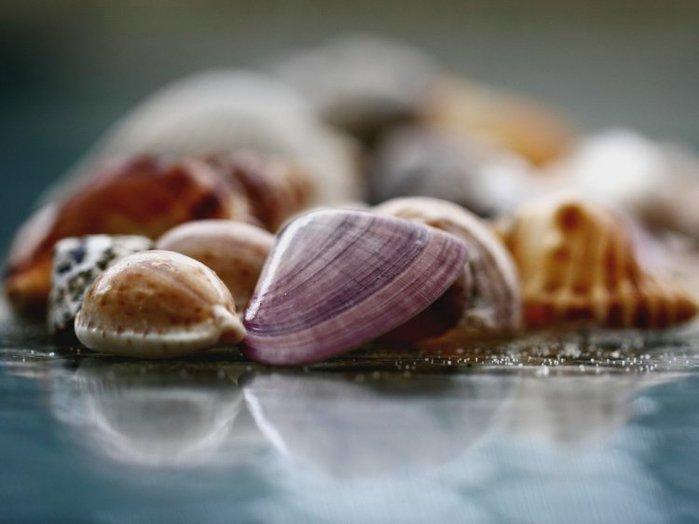 shells_44 (700x524, 40Kb)
