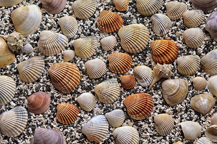 shells_1 (700x466, 468Kb)