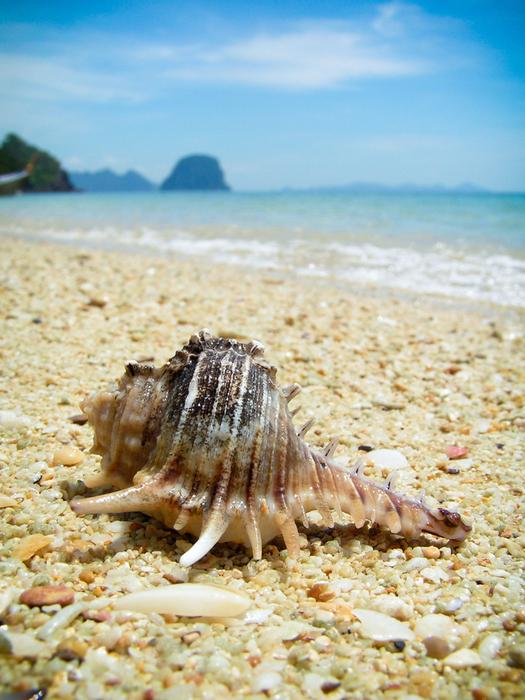 shells_10 (525x700, 496Kb)