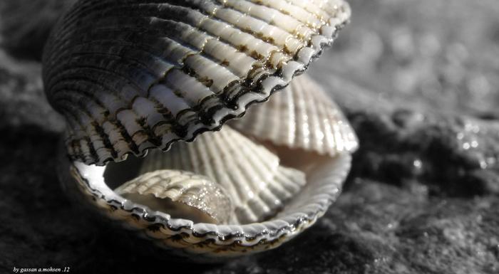shells_12 (700x385, 131Kb)