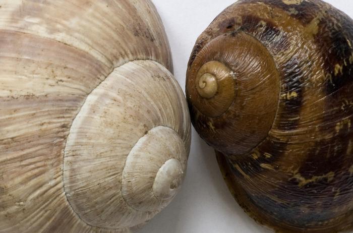 shells_14 (700x462, 229Kb)