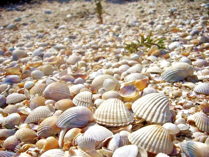 shells_16 (700x525, 260Kb)