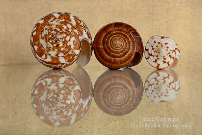 shells_18 (700x466, 255Kb)