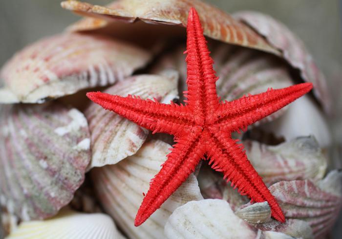 shells_22 (700x489, 228Kb)