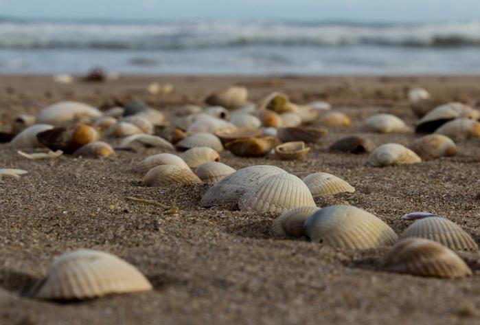 shells_4 (700x473, 198Kb)
