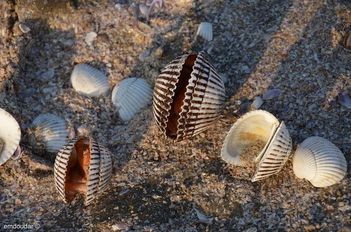shells_6 (700x462, 249Kb)