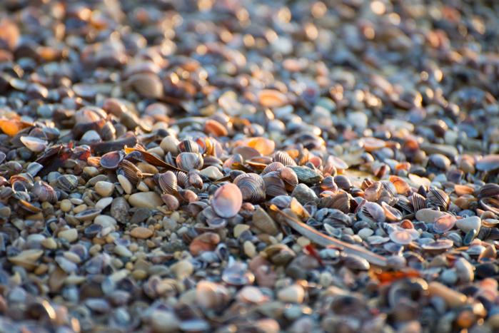 shells_7 (700x467, 290Kb)