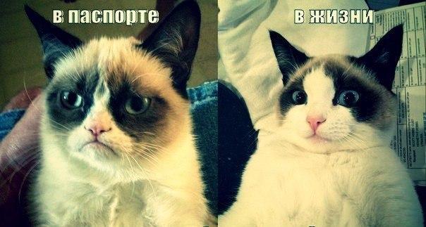 3185107_smeshnii_koshki_foto_1 (604x323, 49Kb)