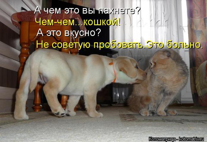 kotomatritsa_c (700x478, 54Kb)