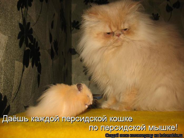 kotomatritsa_Cv (700x524, 46Kb)
