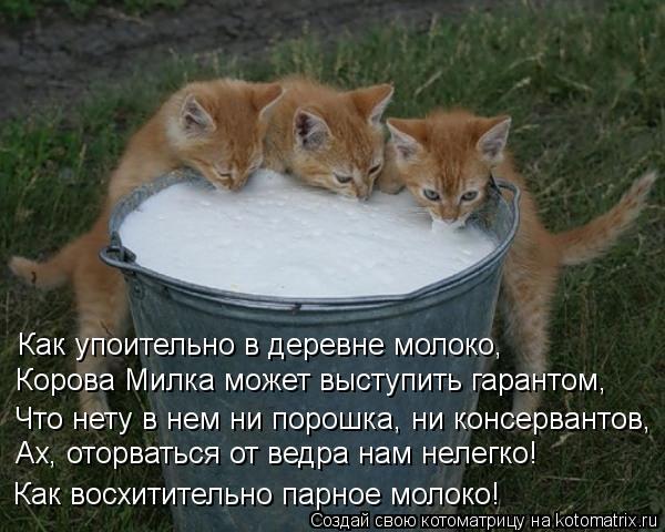 kotomatritsa_Rn (600x480, 57Kb)