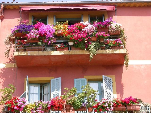 Прекрасный вид цветущего балкона. цветы на балконе. Просмотреть все записи