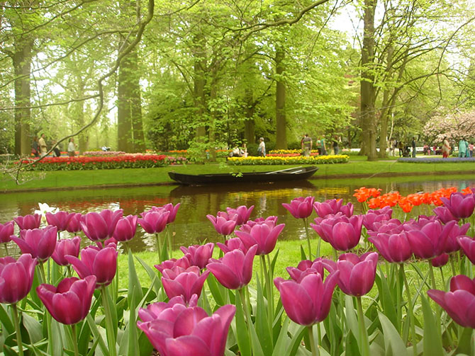 тюльпаны.jpg1 (670x503, 168Kb)