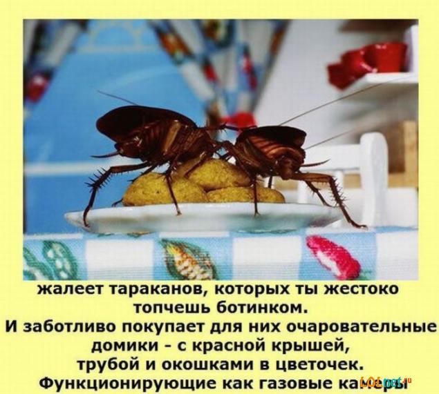 1310351465_fakty-o-zhenwinah-lolnet.ru-27 (635x571, 56Kb)