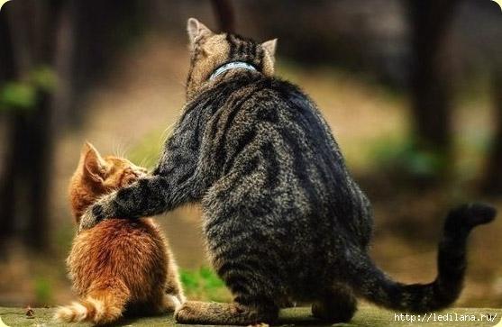 старый мудрый кот (557x363, 124Kb)