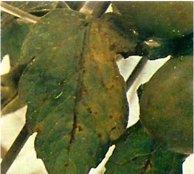марганец (377x339, 45Kb)