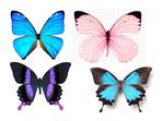 ������ 1278200112_55_FT0_butterflies (562x418, 196Kb)