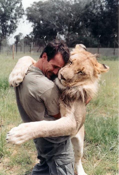 kevin-richardson-the-lion-whisperer-4 (477x700, 132Kb)