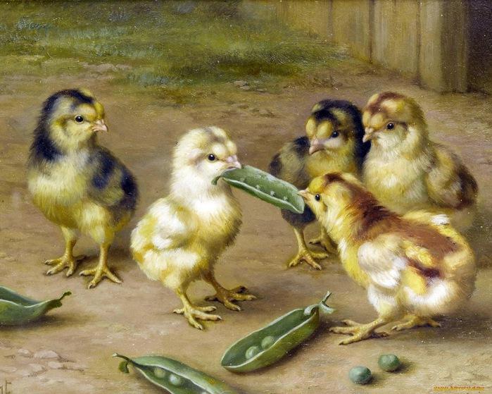 Скачать обои цыплята, Edgar Hunt 800x600.