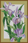 Превью violet_irises (468x700, 482Kb)