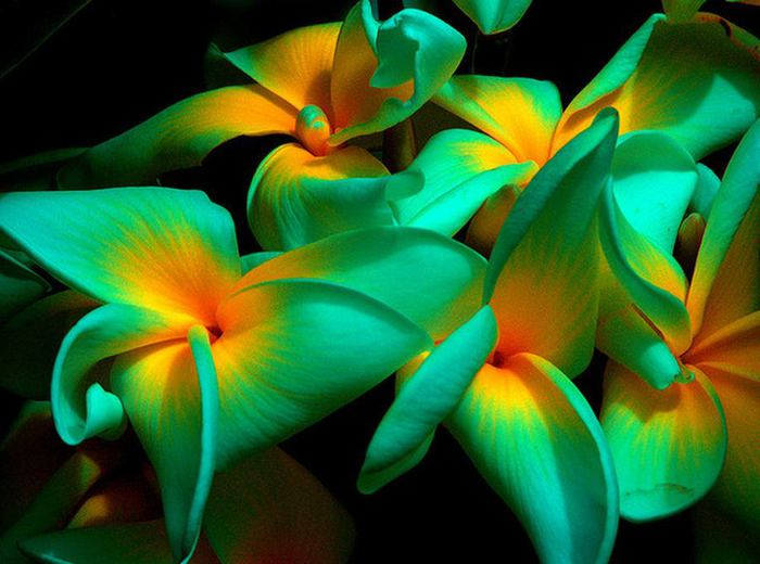 Картинки тропических цветов 5