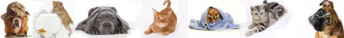 Как избавится от запаха кошек или собак в доме/2719143_62 (697x78, 12Kb)