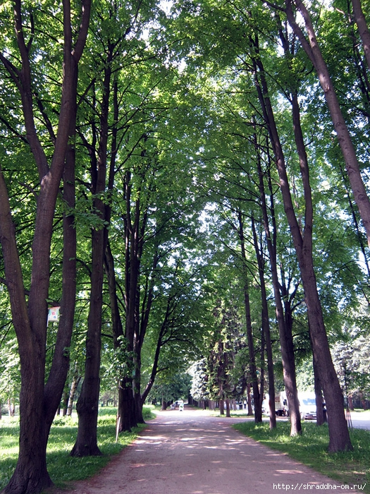 Питер, парк на Крестовским острове (1) (525x700, 501Kb)
