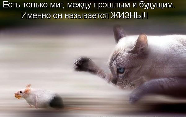 3821971_kot_poc (600x379, 37Kb)
