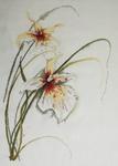 Превью orhideja-Lanarte а (500x700, 136Kb)