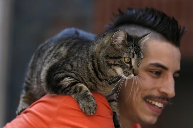 руди салдиа и его кошка мери джейн 4 (625x417, 46Kb)