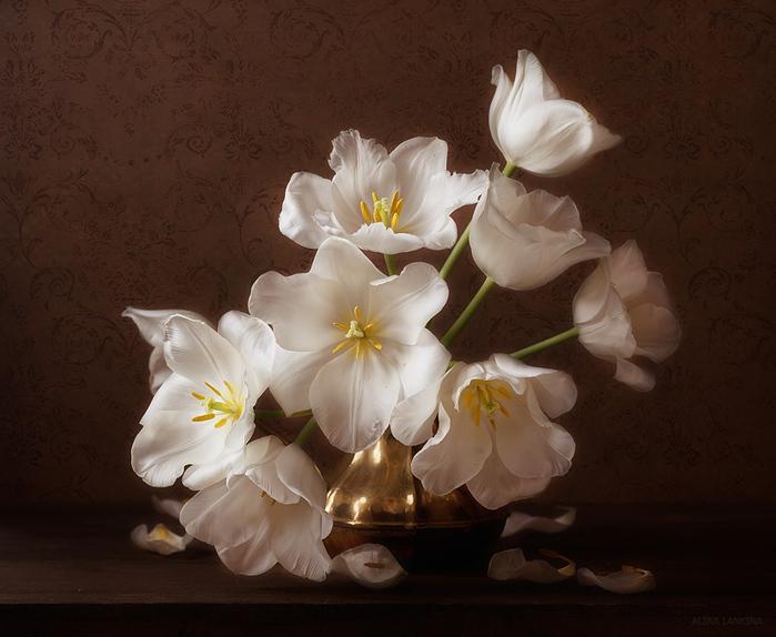 тюльпаны (700x574, 191Kb)