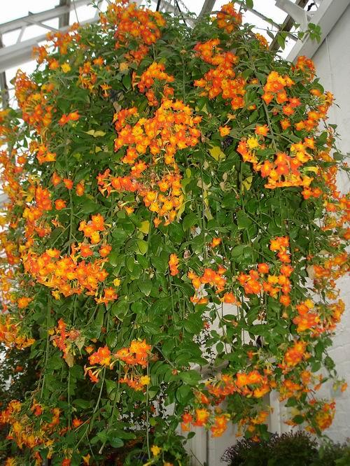 Корзины для цветов плетеные - 29