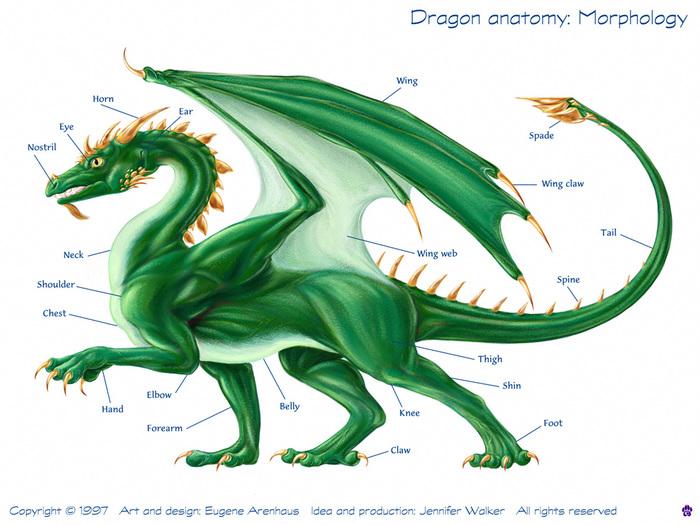 Западные драконы могут быть с