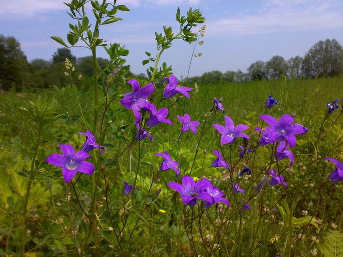 цветы и цветки Национальный парк Валдайский