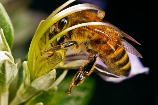 Внимание!  Что делать при укусах пчел, шмелей или ос
