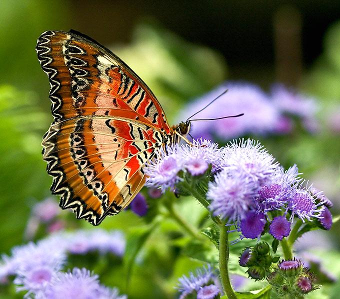 Поздравления с днем рождения живые бабочки