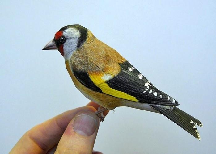 Bird-1 (700x499, 59Kb)