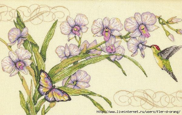 Орхидеи и колибри
