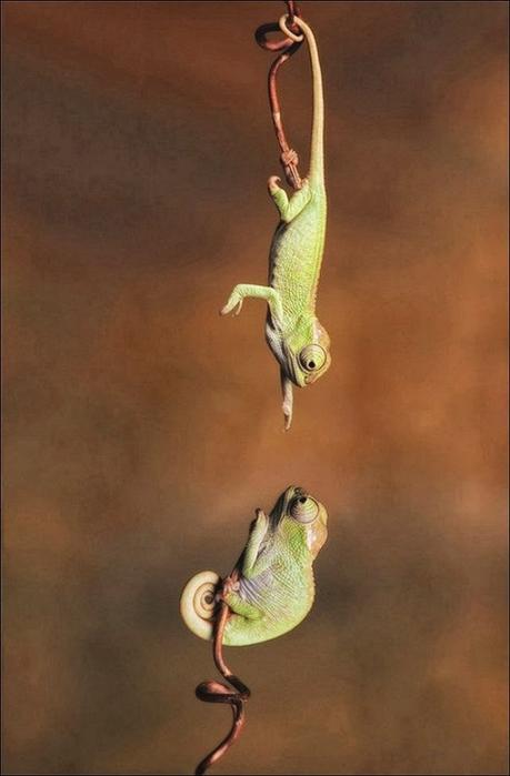 Chameleon03 (459x700, 162Kb)