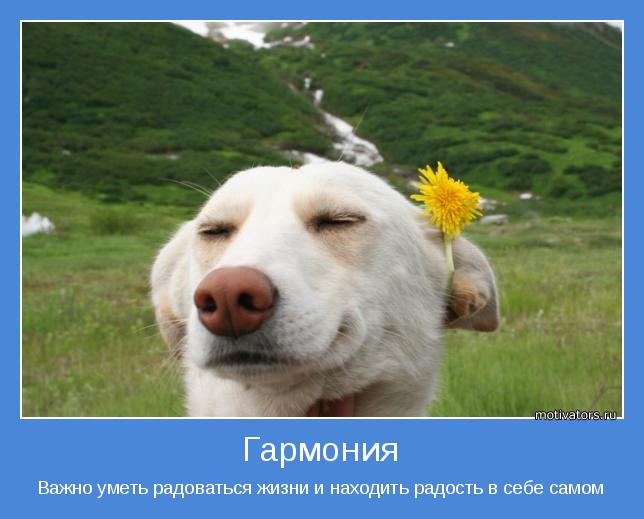 жизнь прекрасна/4552399_pozitivnii_motivator_pro_jizn (644x519, 40Kb)