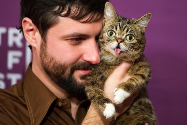 Кошка Lil Bub, Малышка, покорила интернет