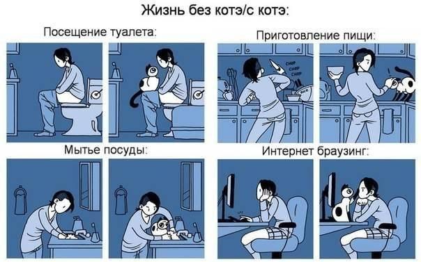 Жизнь с котэ и без