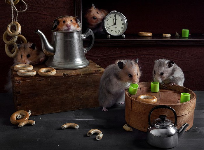 3085196_hamsters06 (700x515, 91Kb)