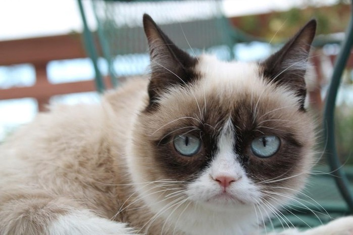 Grumpy Cat - копия (700x465, 67Kb)