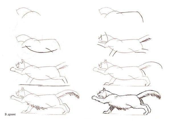 Схемы рисования котов
