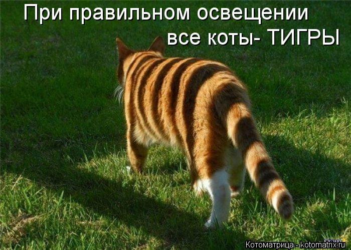 kotomatritsa_BJB (700x499, 201Kb)