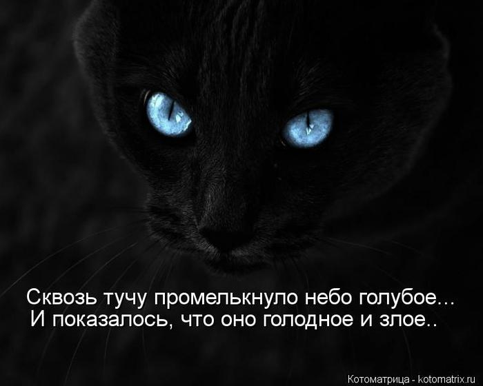 kotomatritsa_uJ (700x560, 134Kb)