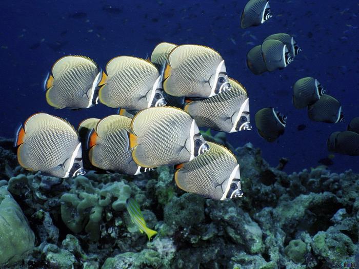 1366116121_ocean_life_wallpapers_116 (700x525, 458Kb)