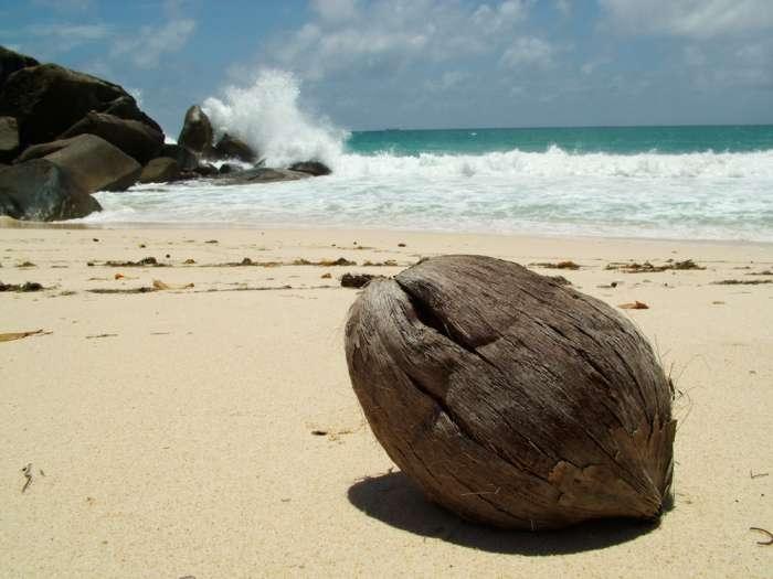 сейшельские острова фото 19 (700x525, 130Kb)